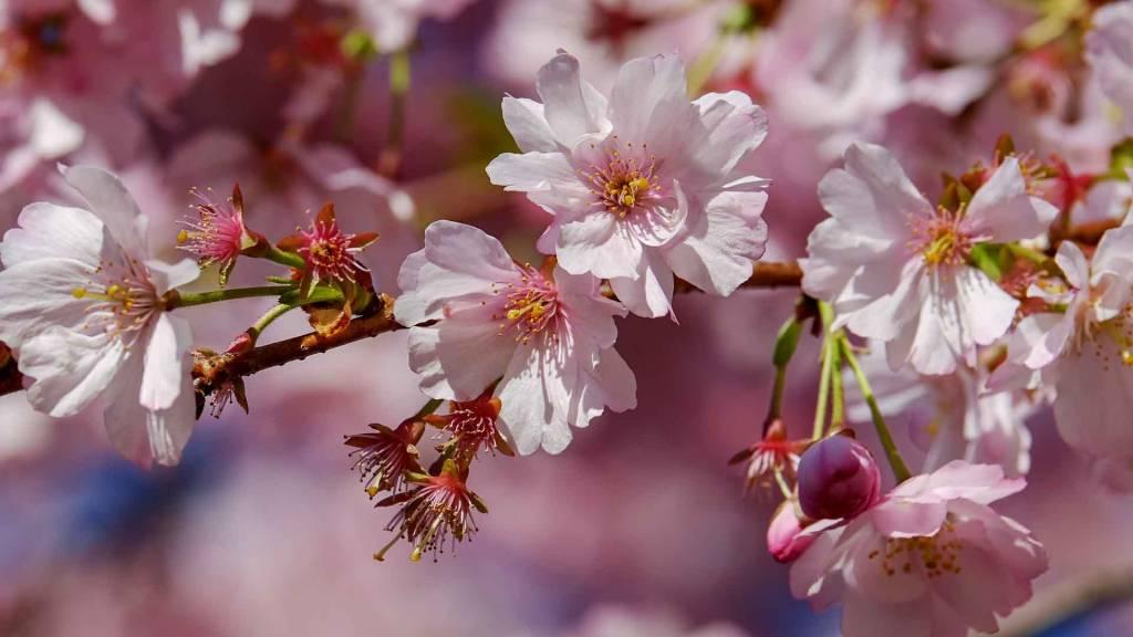 Massagepraktijk Blossom Veldhoven